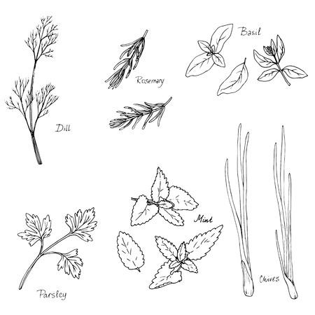 wyciągnąć rękę zioła przyprawowe, rozmaryn, bazylia, mięta i koper i pietruszka, ręcznie rysowane ilustracji wektorowych