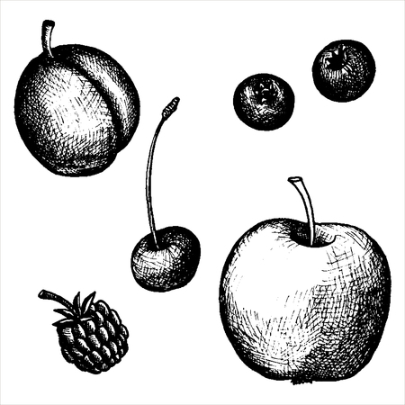 cowberry: hand drawn fruits and berries, vintage vector illustration