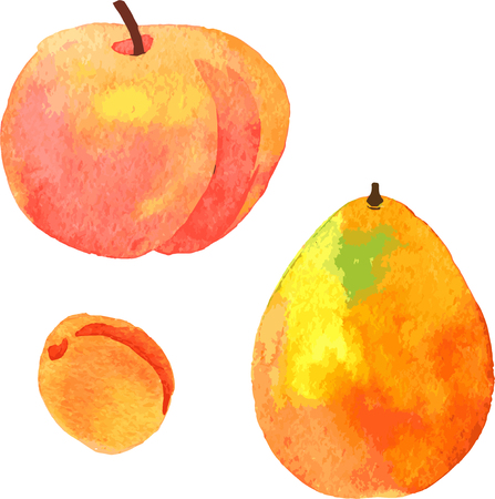 apricot: watercolor fruits, peach,apricot and pomelo, hand drawn vector illustration Illustration