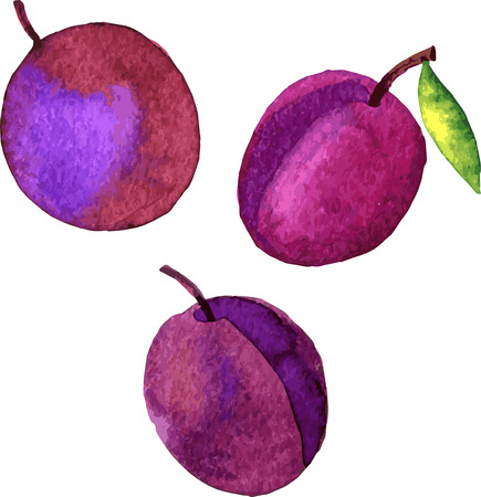plums: plums, watercolor fruits, hand drawn vector illustration Illustration