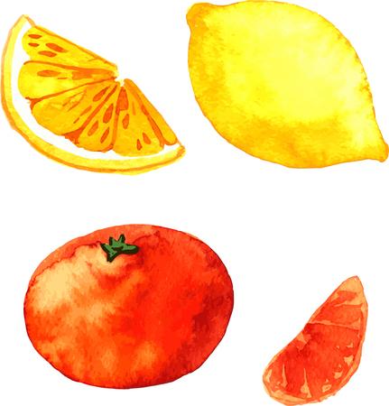 citrus fruits: orange and lemon, watercolor citrus fruits, hand drawn vector illustration Illustration