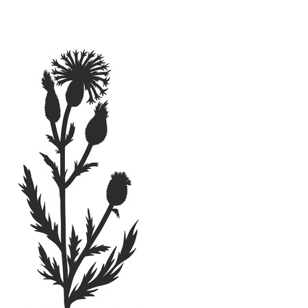 cornflower plants, floral composition with wild plants, drawing floral card, hand drawn vector illustration