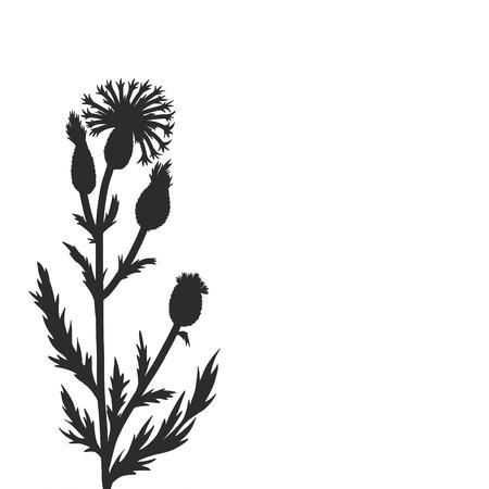 Kornblume Pflanzen, florale Komposition mit Wildpflanzen, zeichnen Blumenkarte, von Hand gezeichnet Vektor-Illustration