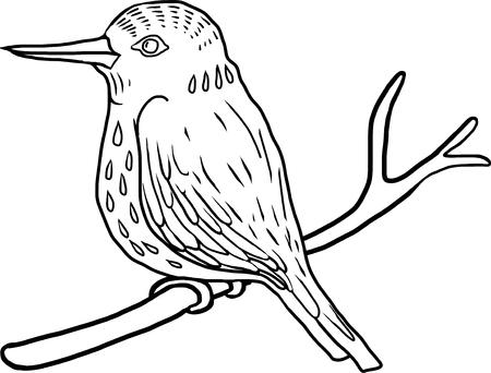 vector hand drawng bird, kingfisher at white background, hand drawn vector illustration Illustration