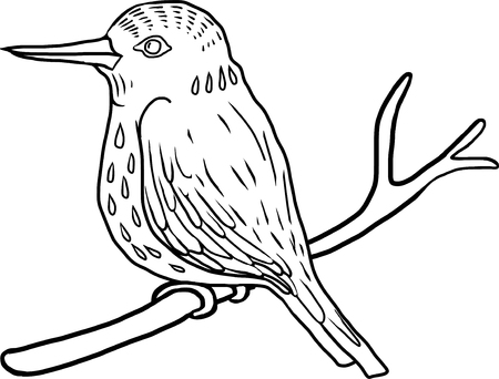 halcyon: vector hand drawng bird, kingfisher at white background, hand drawn vector illustration Illustration