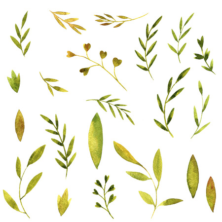 green branches: set of watercolor green branches and leaves, hand drawn vector design elements