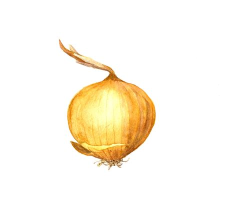 unpeeled: isolated yellow watercolor onion, hand drawn watercolor illustration Stock Photo
