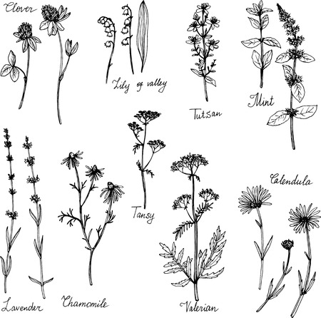 hand drawn medical plants, herbal set, sketch vector illustration