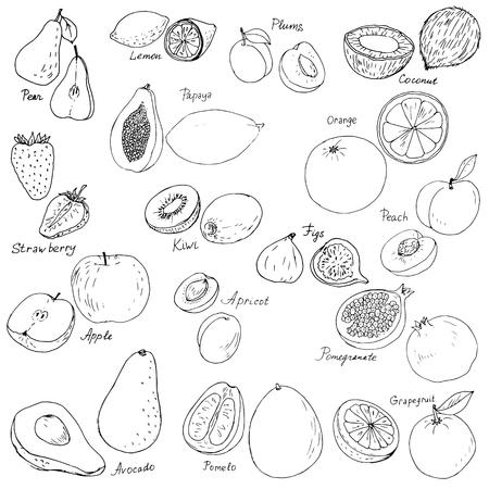ink drawing: hand drawn fruits vector set, ink drawing vector elements