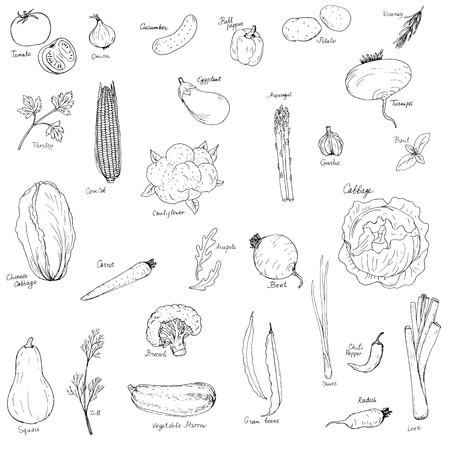 potherb: hand drawn vegetables set, hand drawn vector illustration