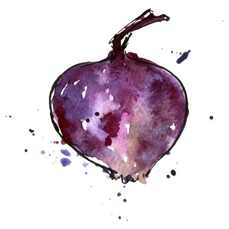 unpeeled: vector isolated purple watercolor onion with paint staines at white background, hand drawn watercolor illustration