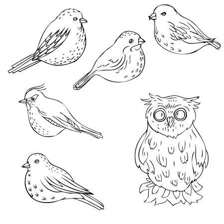 pigeon owl: vector hand drawn birds, isolated songbirds and owl, hand drawn vector elements