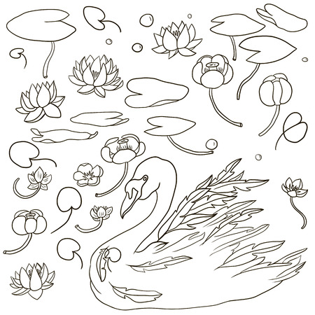 simple purity flowers: vector swan and water plants,hand drawn vector elements