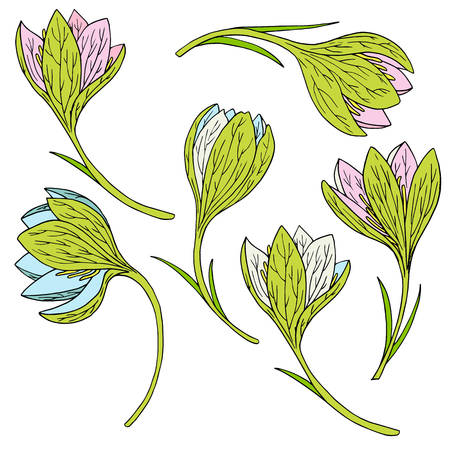 snowdrops: vector set of ink drawing snowdrops, hand drawn vector elements
