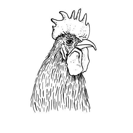 cock hand: head of cock,hand drawn roosters head,artistic ink drawing illustration of fowl