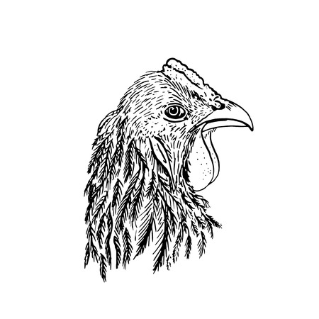 fowl: head of chiken,hand drawn roosters head,artistic ink drawing illustration of fowl Illustration