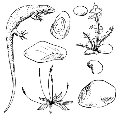 reptile: lisard,stones and plants sketch,ink drawing reptile and nature objects, hand drawn vector illustration