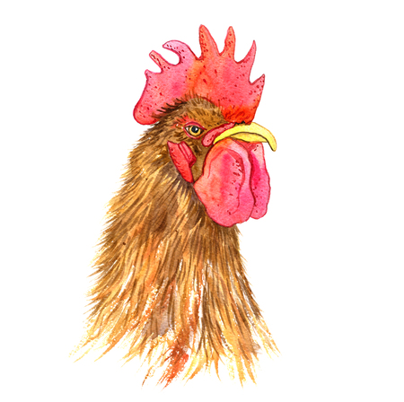 fowl: watercolor drawing head of cock,hand drawn rooster,artistic painting illustration of fowl Stock Photo