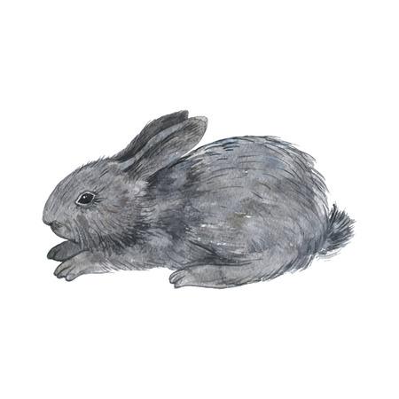 vecteur petit lapin pelucheux, dessin gris mignon lapin aquarelle, tiré par la main illustration artistique, peinture d'art
