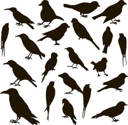 vector conjunto de siluetas de pájaros, pájaros cantantes, dibujados a mano, elementos del vector aislados Ilustración de vector