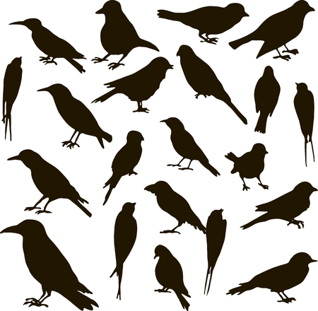 chickadee: vector set of birds silhouettes, hand drawn songbirds, isolated vector elements