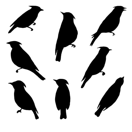 waxwings, vector set of birds silhouettes, hand drawn songbirds, isolated vector elements