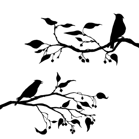 apple tree isolated: vector silhouettes of birds at tree, hand drawn waxwings at branch of wild apple tree, isolated vector element