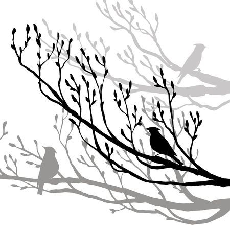 songbird: vector silhouettes of birds at tree, hand drawn songbird at branch, isolated vector element