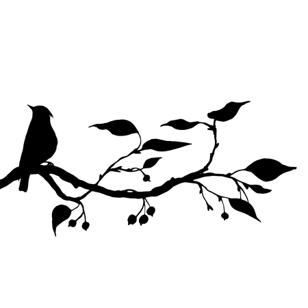 apple tree isolated: vector silhouettes of birds at tree, hand drawn waxwing at branch of wild apple tree, isolated vector element