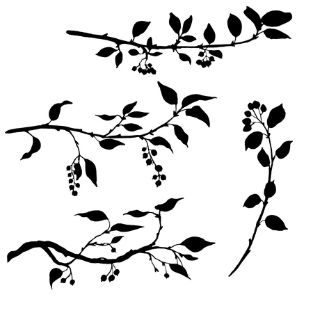twigs: set of tree branches with leaves and berries,fruit trees twigs,isolated hand drawn vector elements