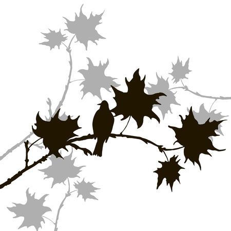songbird: vector silhouette of bird at tree, hand drawn songbird at branch of maple tree,vector illustration