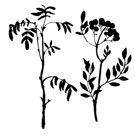 rowan tree: set of tree branches with leaves, rowan shoots,isolated hand drawn vector elements