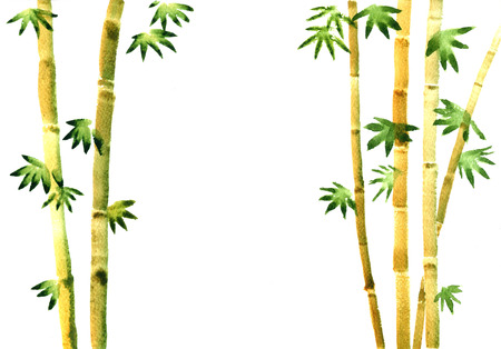 stalks: watercolor bamboo grove, fresh bamboo stalks, green bamboo forest, hand drawn illustration