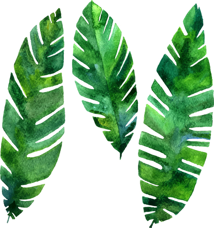 palmetto: set of vector watercolor green  leaves of palm tree, exotic leaves, hand drawn vector design elements