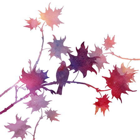 songbird: silhouette of bird at tree drawing in watercolor, hand drawn songbird at branch of maple tree,artistic illustration Stock Photo
