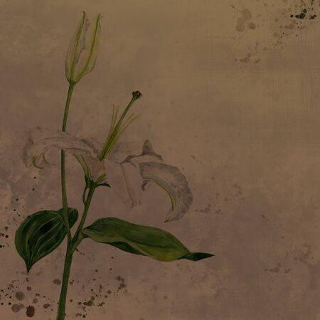 white lily: watercolor drawing white lily flower with bud and green leaves at vintage background, artistic floral illustration, scrapbook background, hand drawn illustration