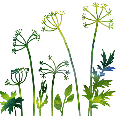 dill: dill plants, floral composition with wild plants drawing in watercolor, drawing floral card,  watercolor artistic nature background, hand drawn illustration
