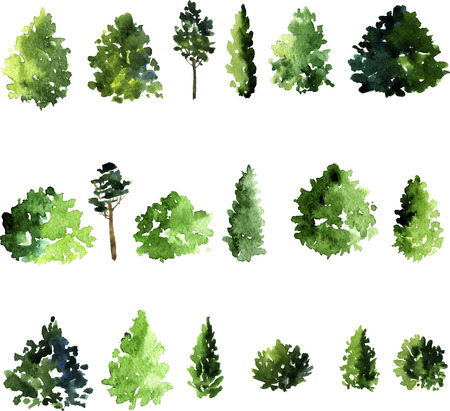 larch: set of trees drawing by watercolor, conifer and decidious trees, green foliage, hand drawn vector illustration