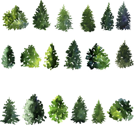 drawing trees: set of trees drawing by watercolor, conifer and decidious trees, green foliage, hand drawn vector illustration