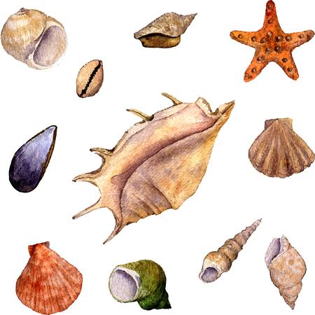 水彩ブローチ シェル、ヒトデと貝殻の白い背景の手描き水彩イラストで孤立のベクトルを設定