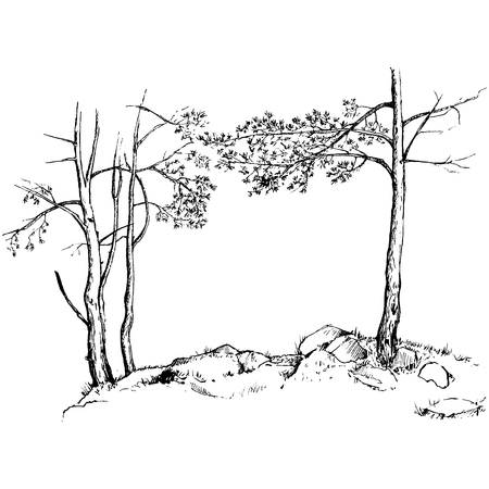 larch: pine trees, grass and rocks drawing by ink, sketch of wild nature, forest sketch, hand drawn vector illustration