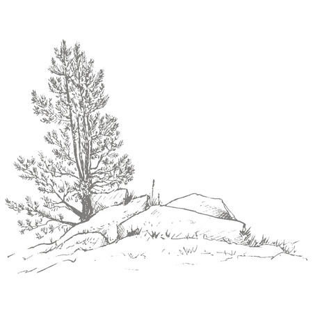 larch: young pine trees and rocks drawing by ink, sketch of wild nature, forest sketch, hand drawn vector illustration Illustration