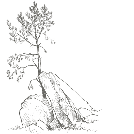 larch: young pine tree and rocks drawing by ink, sketch of wild nature, forest sketch, hand drawn vector illustration Illustration