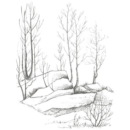 drawing trees: young birch trees, bushes and rocks drawing by ink, sketch of wild nature, forest sketch, hand drawn vector illustration