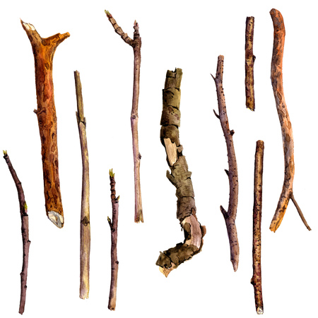bough: watercolor wood twigs,isolated hand drawn nature objects, tree branches, sticks, hand drawn illustration