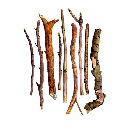 pine boughs: watercolor wood twigs,isolated hand drawn nature objects, tree branches, sticks, hand drawn illustration