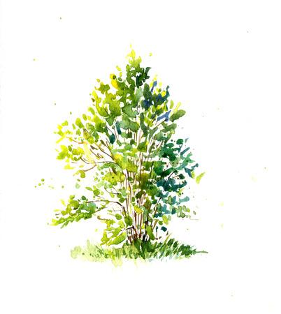 수채화에 의해 태양 도면에 의해 점화 녹색 숲, 봄 나무의 수채 화법 스케치, 그림 정원 나무, 손으로 그린 아트 배경