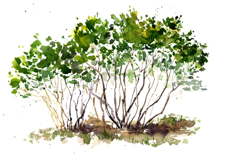 aquarelle painting art: green bushes drawing by watercolor, aquarelle sketch of spring shrubs, painting garden trees, hand drawn art background Stock Photo