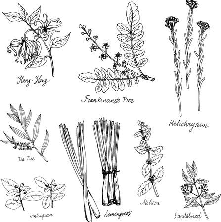 handgetekende medische en aromatische planten, kruiden set, schets vector illustratie