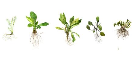 Set van aquarel tekening wilde bloemen, kruiden en gras met bladeren en wortels, geschilderd wilde planten, botanische illustratie in vintage stijl, kleur tekening bloemen set, getrokken hand illustratie